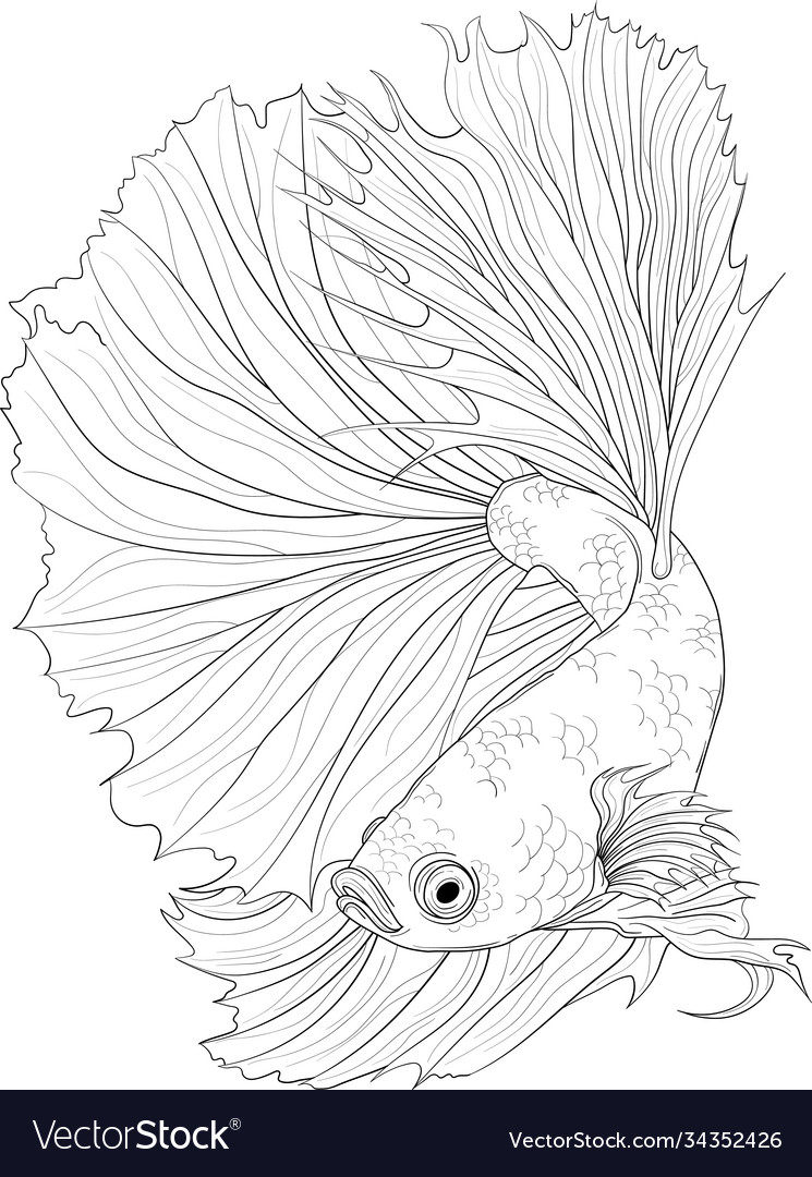 Realistic Fish Drawing : realistic, drawing, Realistic, Dragon, Sketch, Fighting, Vector, Image