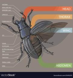 diagram of housefly [ 1000 x 1030 Pixel ]