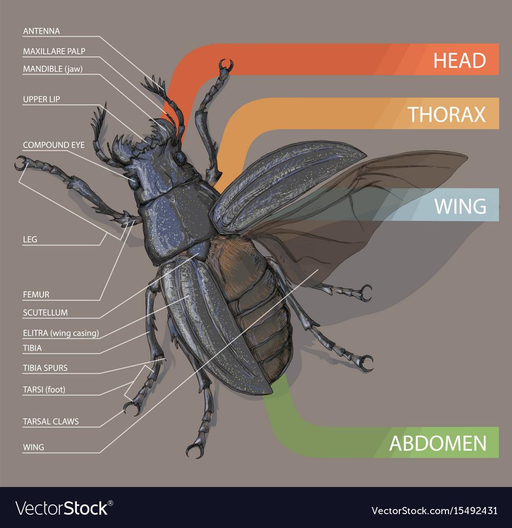 medium resolution of diagram of housefly