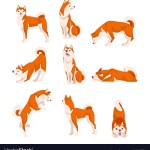Shiba Inu Dog In Various Poses Set Cute Japan Red Vector Image
