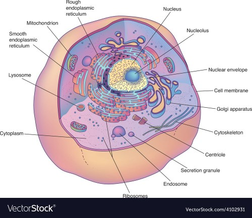 small resolution of cell diagram animal wiring diagram blogs diagram of animal cell under electron microscope animal cell diagram