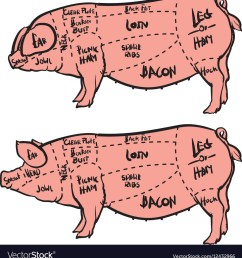 hand drawn pig diagram butcher diagram vector image [ 963 x 1080 Pixel ]