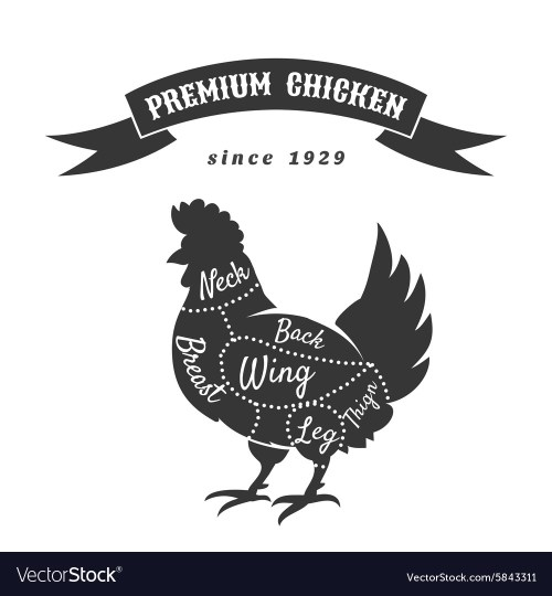 small resolution of chicken meat cuts diagram vector image