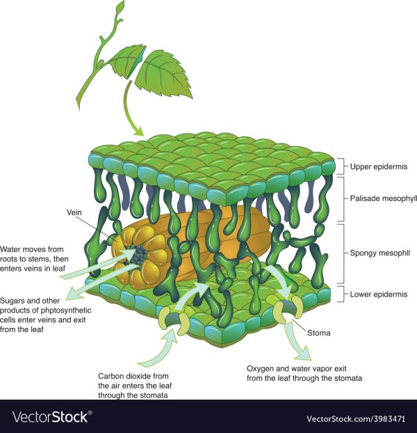 Internal Leaf