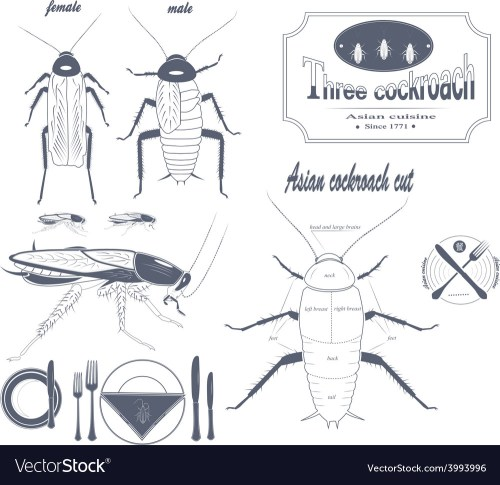 small resolution of asian cockroach vector image