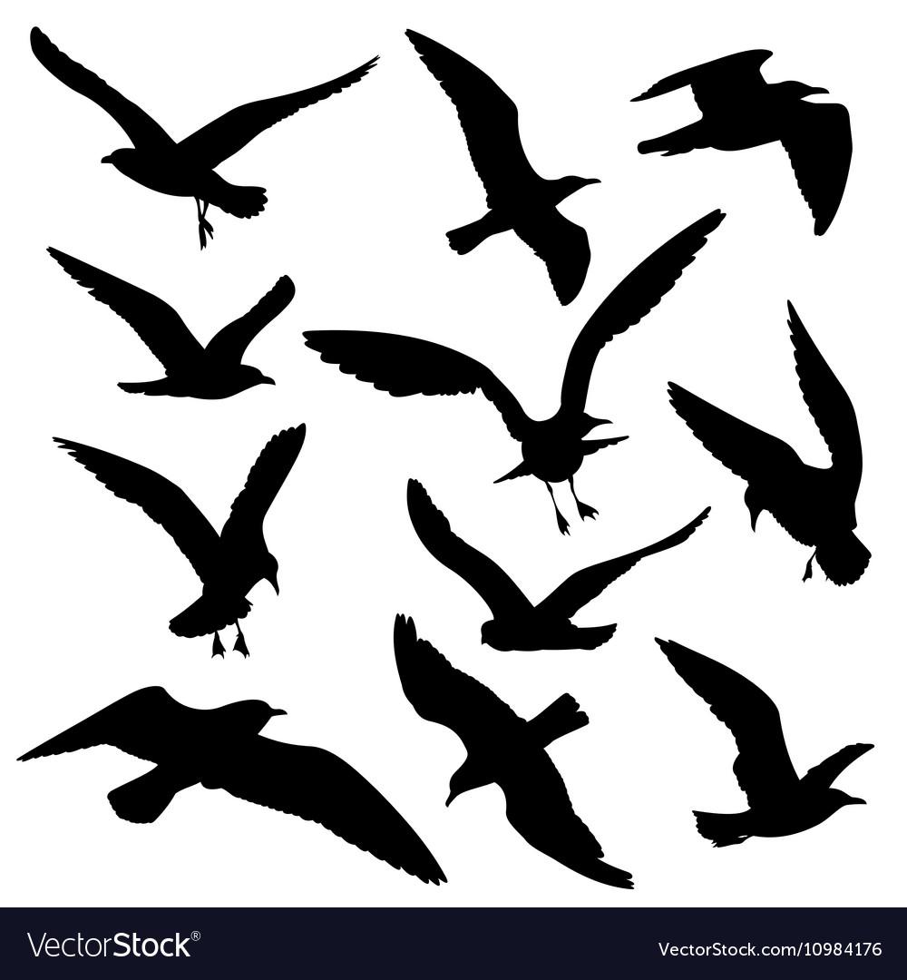 flying birds black silhouettes
