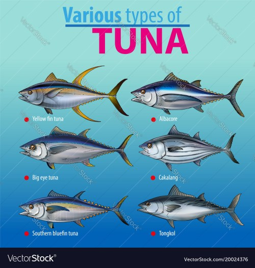 small resolution of tuna fish vector image