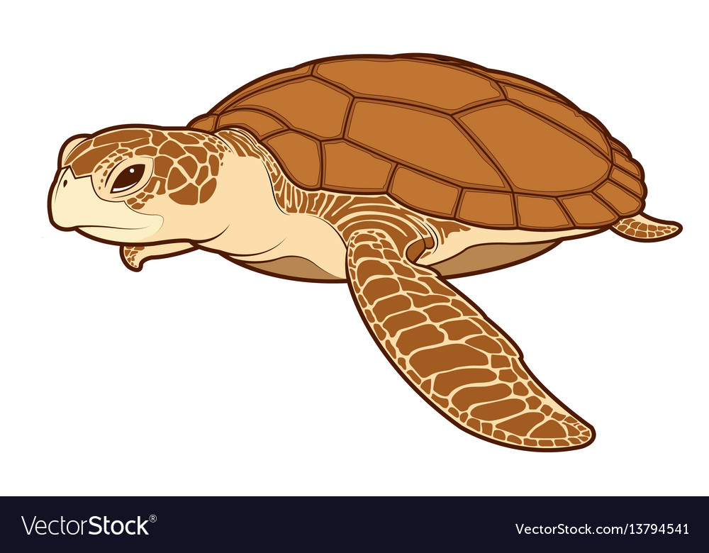 Sea Turtle Color Royalty Free Vector Image Vectorstock