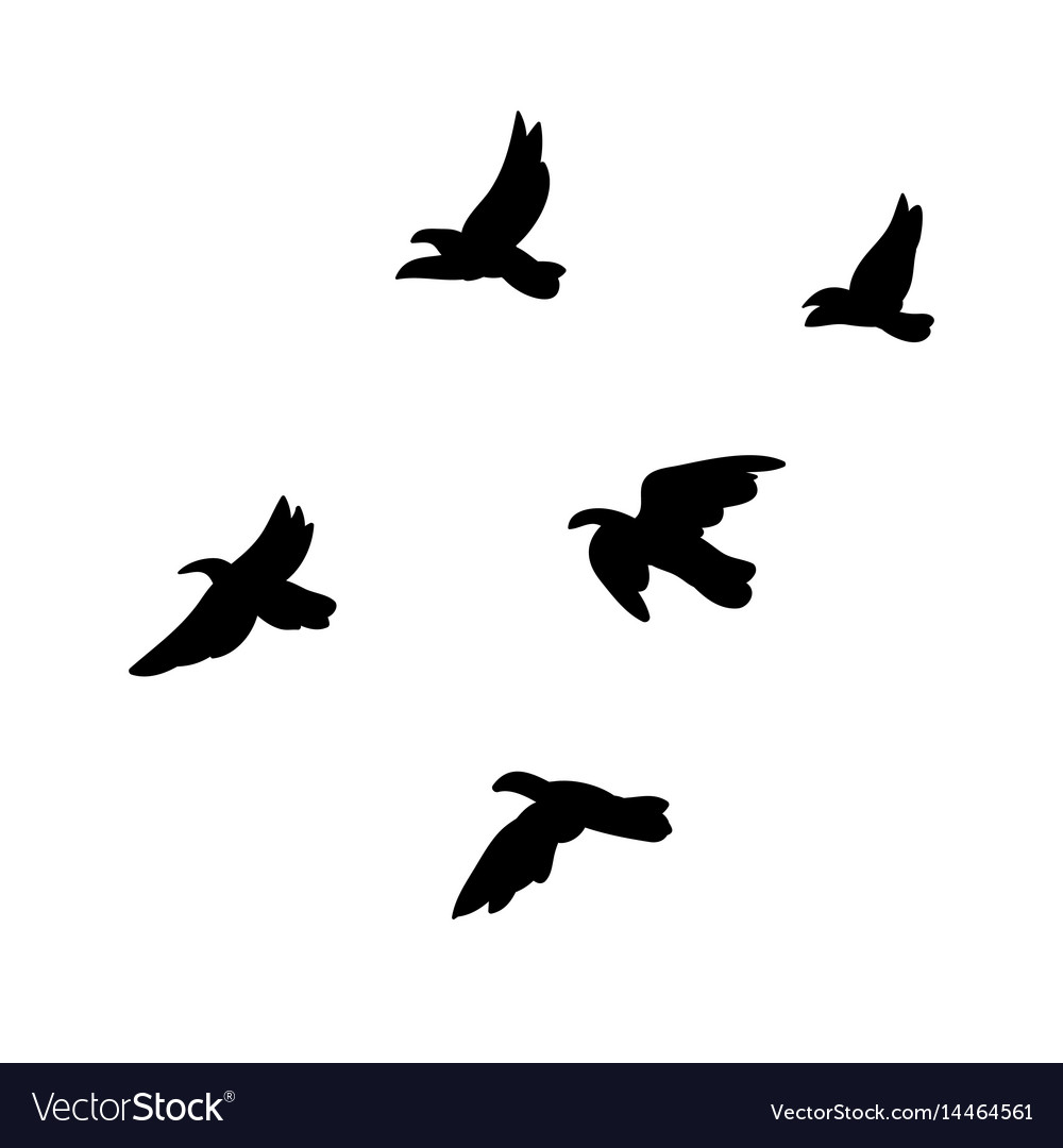 black flying birds flock