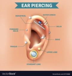 ear diagram project [ 1000 x 1080 Pixel ]