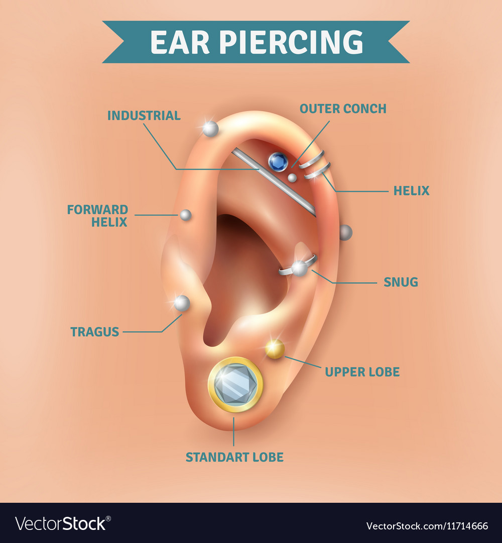 different ear piercings diagram 12v photocell switch wiring piercing types positions background poster vector image