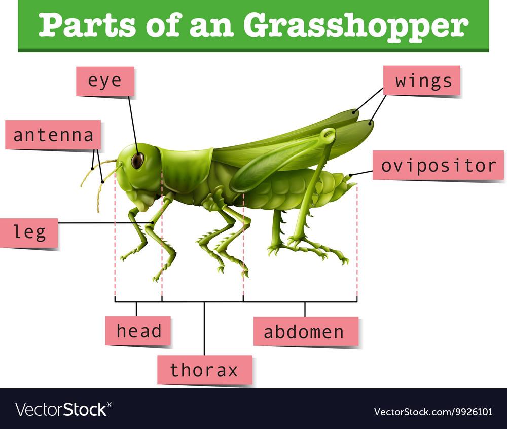 external grasshopper diagram deutz emr2 wiring showing different parts of vector image