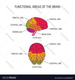 brain stem diagram [ 1000 x 1080 Pixel ]