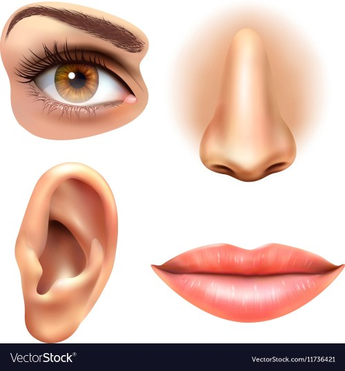 small resolution of diagram of eye nose