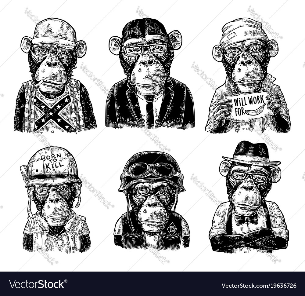 monkey in human clothes