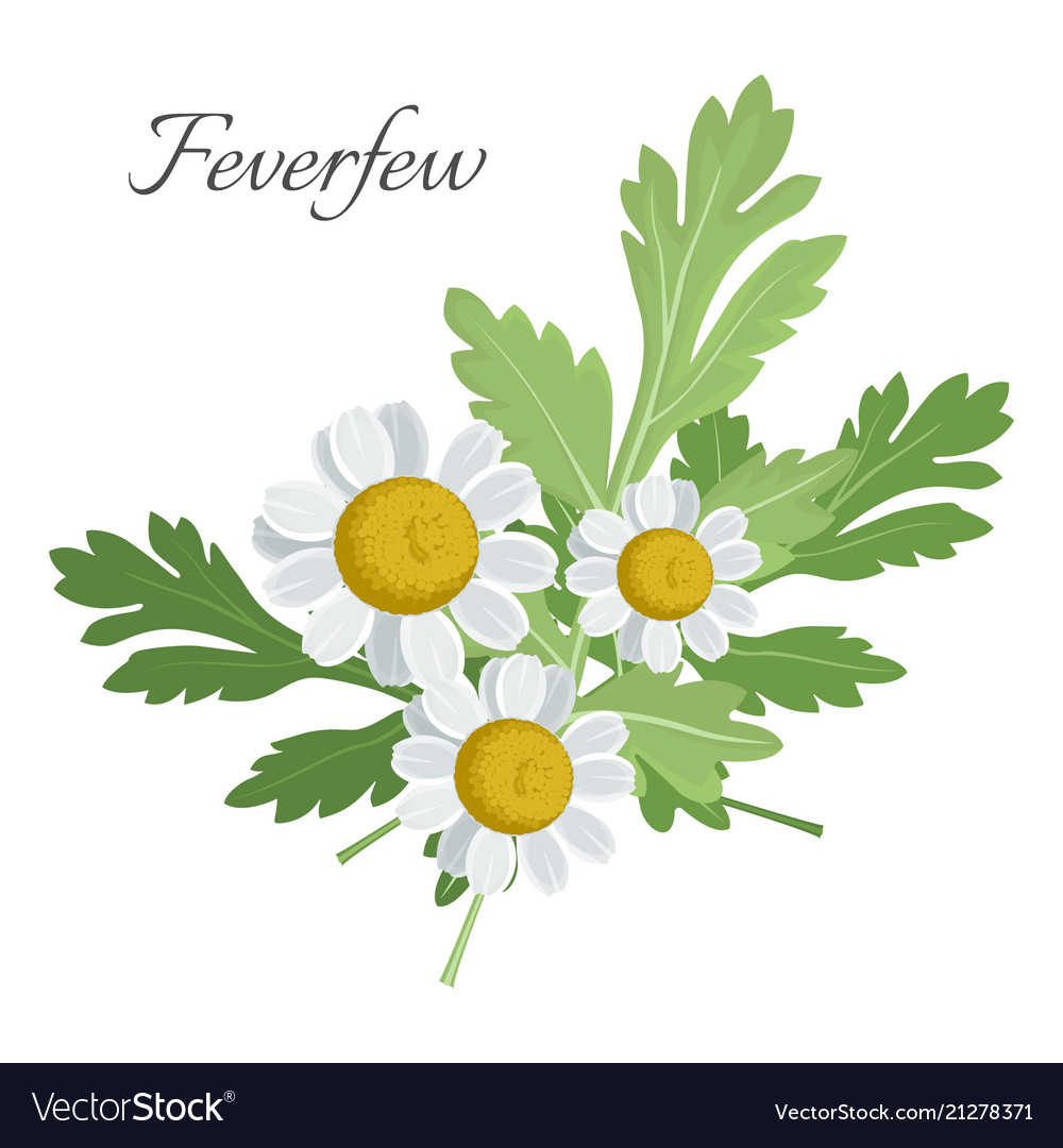 feverfew floral element with