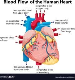 heart diagram with blood flow [ 1000 x 1001 Pixel ]