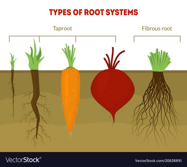 Types Of Root Systems In Plants