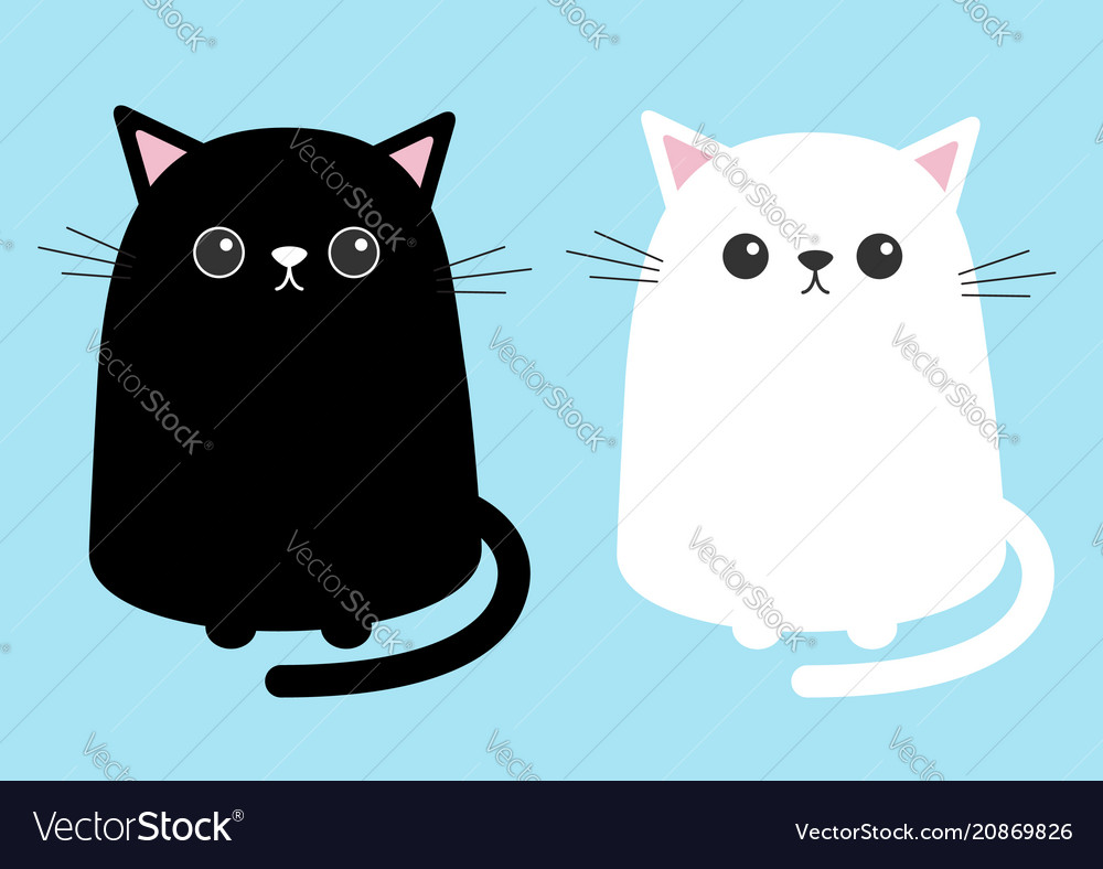 black white cute cat