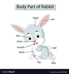 diagram showing body part rabbit vector image [ 1000 x 1080 Pixel ]