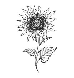 Sunflower Vector Images (over 13,000)