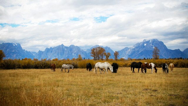 Animals grazing in a field with mountains in the background.