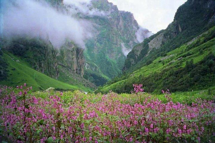 https://i0.wp.com/cdn2.walkthroughindia.com/wp-content/uploads/2012/10/Trek-to-Valley-Of-Flowers.jpg