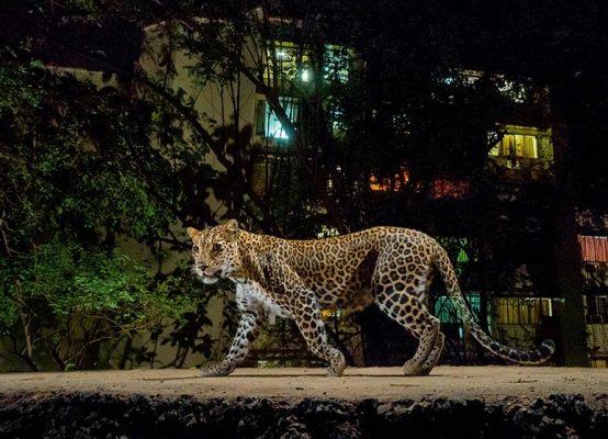 Urban Wildlife And Wild Animals of Indian Cities