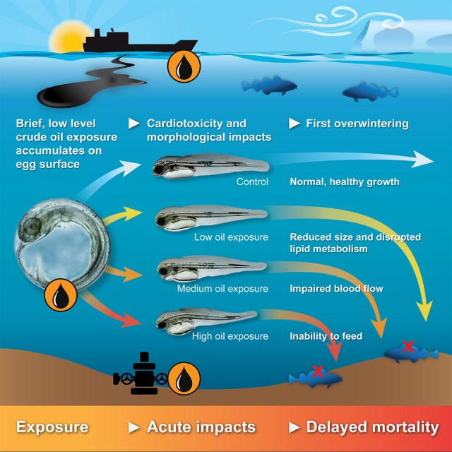 Arctic_CodGraphical abstract.jpg
