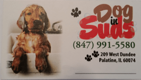 Dog In Suds Grooming Palatine