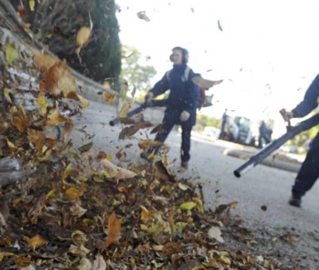 Porn Website Offers Free Leaf Removal In Hudson Valley