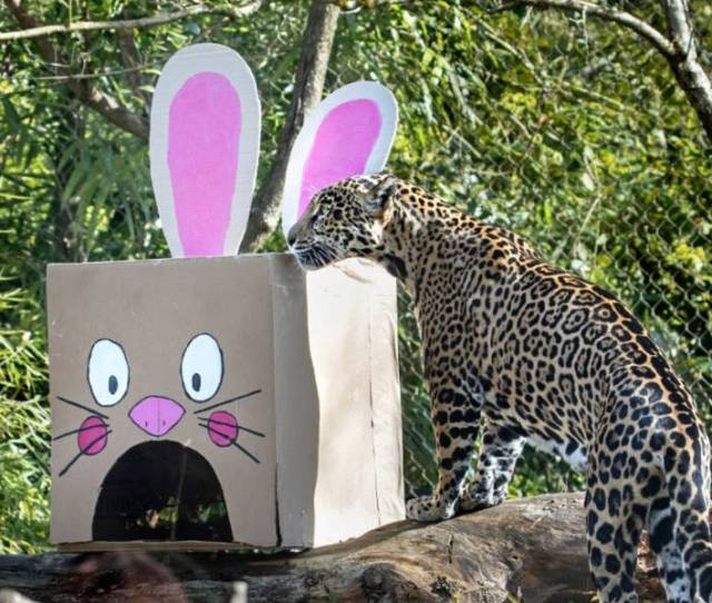 Woodland Park Zoo Plans Easter Festivities