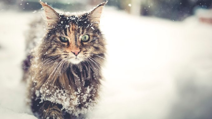 Cozy Fall Hd Wallpaper 5 Winter Grooming Tips For Cats Cattime