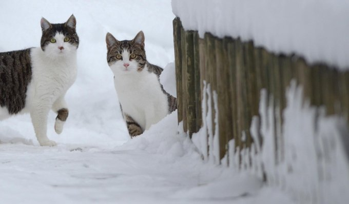 Keeping Your Cats Safe During Winter Storms  CatTime