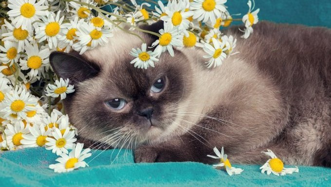 Portrait of the cat with flowers