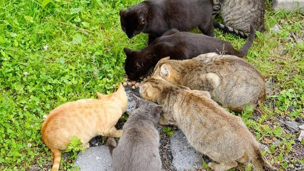 many cats eating from same food pile outside