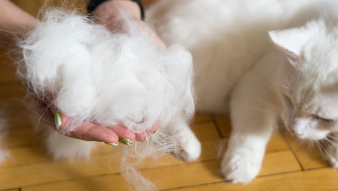 Cat shedding lots