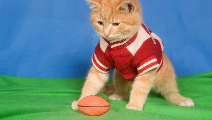 A kitten wearing a letterman jacket sits next to football on green and blue background.