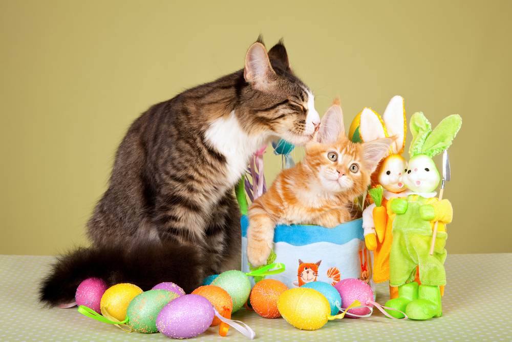 Image result for easter basket for cat
