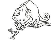 Disegno di Camaleonte su un ramo da Colorare - Acolore.com