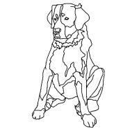 Disegno di Labrador da Colorare - Acolore.com