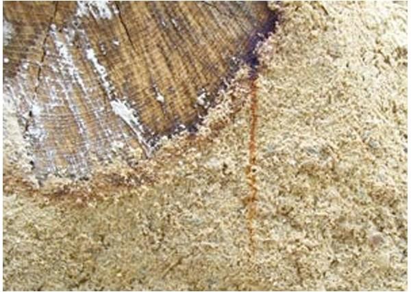 sous couche isolante en phase aqueuse pour bois tanniques batitanin batidirect
