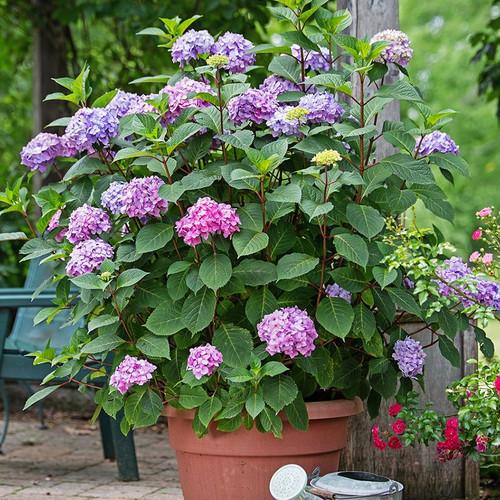 Zone 5 Perennials Bloom All Summer
