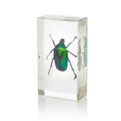 Chafer Beetle in Resin  Evolution Store