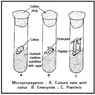 Reproduction in Plant, Biology, Class 12 Class 12 Notes