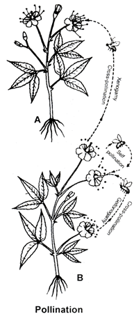 Sexual Reproduction in Flowering Plants, Chapter Notes