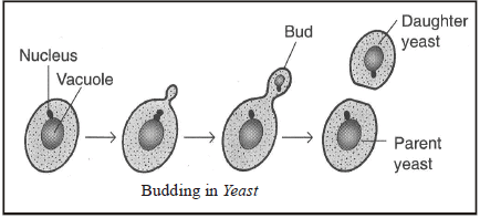 Modes of Reproduction used by Single Organism Class 10