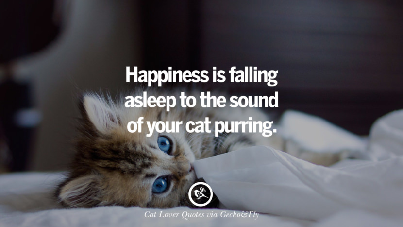 Free Fall Cat Wallpaper 25 Cute Cat Images With Quotes For Crazy Cat Ladies
