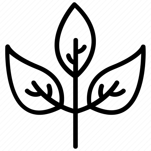 Herb, leaves, natural, organic, thyme icon
