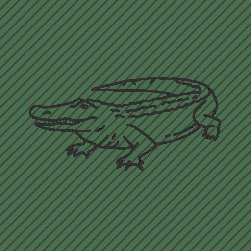 Alligator, alligatoridae family, american alligator
